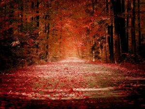 red-road-of-autumn-season-wallpaper-hd