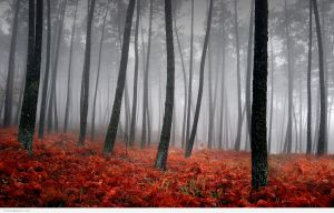 Stunning-Fall-Photography-Wallpapers-4